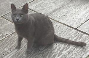 Keats-Cat-4